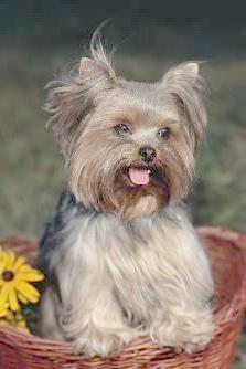 Tarjetas virtuales con fotos de perros