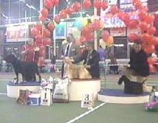 Победители конкурса ЛУЧШАЯ СОБАКА ВЫСТАВКИ, Выставка МЕМОРИАЛ ЮРИЯ НИКУЛИНА-2001